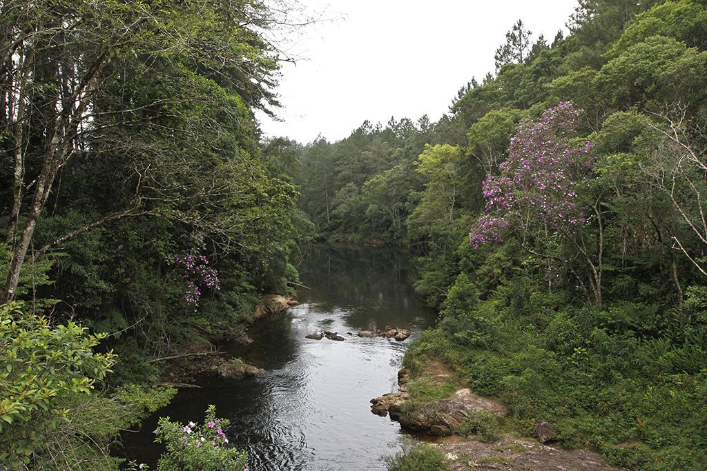 Riacho estreito de águas calmas com algumas pedras no leito. Em ambas as margens, mata bastante fechada composta por vegetação rasteira, árvores média e grandes.